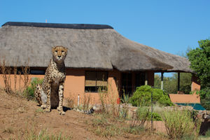 Babson House @ Cheetah Conservation Fund