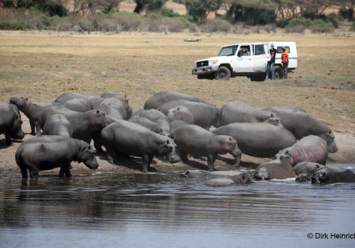 This off-road vehicle came driving through the dry river from the Botswana side. With their cell phones the passengers took pictures of the hippos.