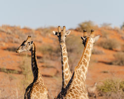10 Day Namibian Highlights Tour